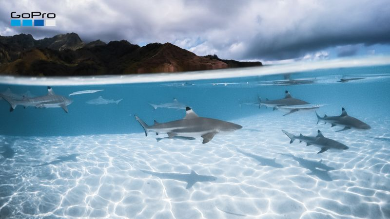 GoPro News Virtual Backgrounds SharkyWaters Zoom